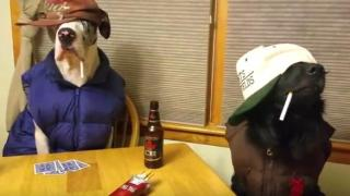 cani mannequin challenge poker