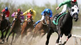 corse cavalli