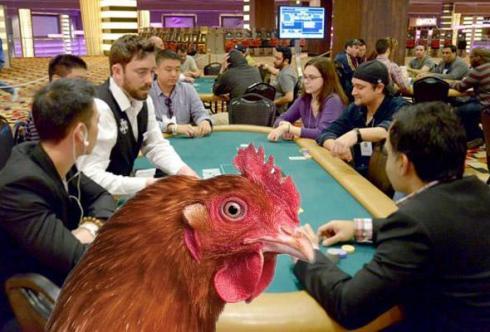 pollo poker
