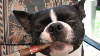 cane fumatore