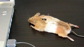 real mouse