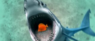 shark and fish 1440x900