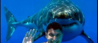 sharkcreativecommons sm