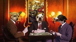 cani poker